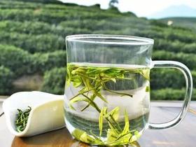 福鼎白茶的品鉴方法